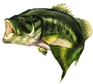 Bass Fish cornhole game decals