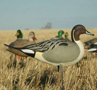 AVERY GREENHEAD GEAR GHG FULL BODY PINTAIL DUCK DECOYS 4 DRAKES NEW