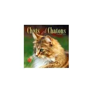 Cats & Kittens (French) 2008 Wall Calendar (9781554601042): Books