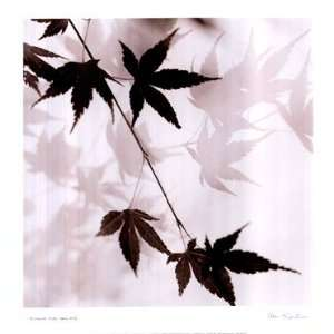 Japanese Maple Leaves No. 1   Poster by Alan Blaustein