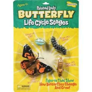 Butterfly Life Cycle Stages: Office Products